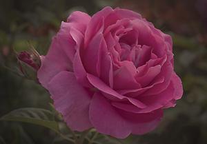 Julia Child The Garden Diary