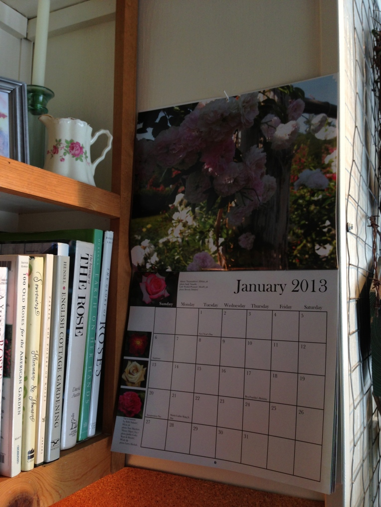 Something new decorating the Potting Shed ... The 2013 ARS Calendar. On the March page you'll find my Bourbon Queen!