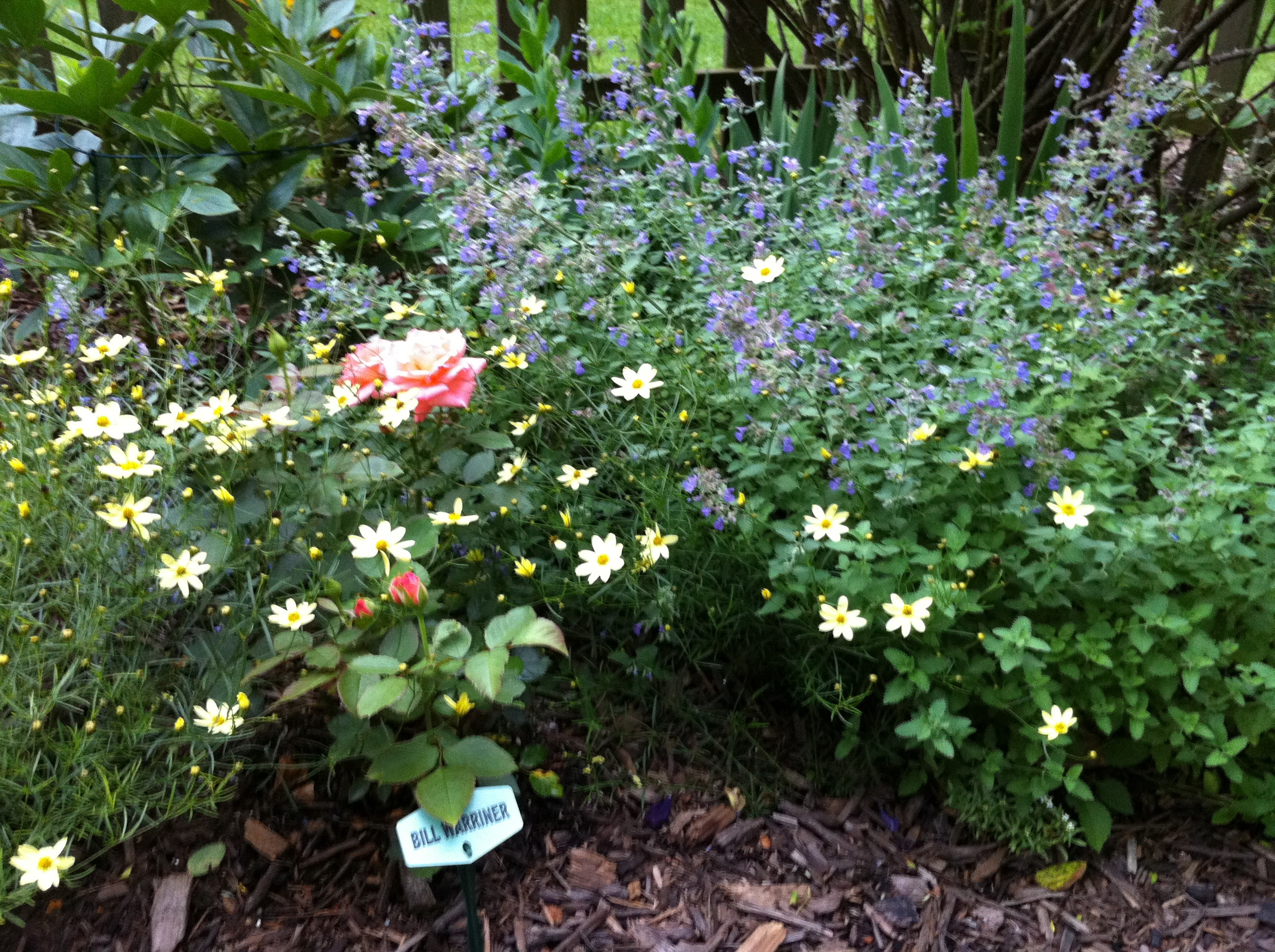 Bloom Thyme Rose Companions The Garden Diary