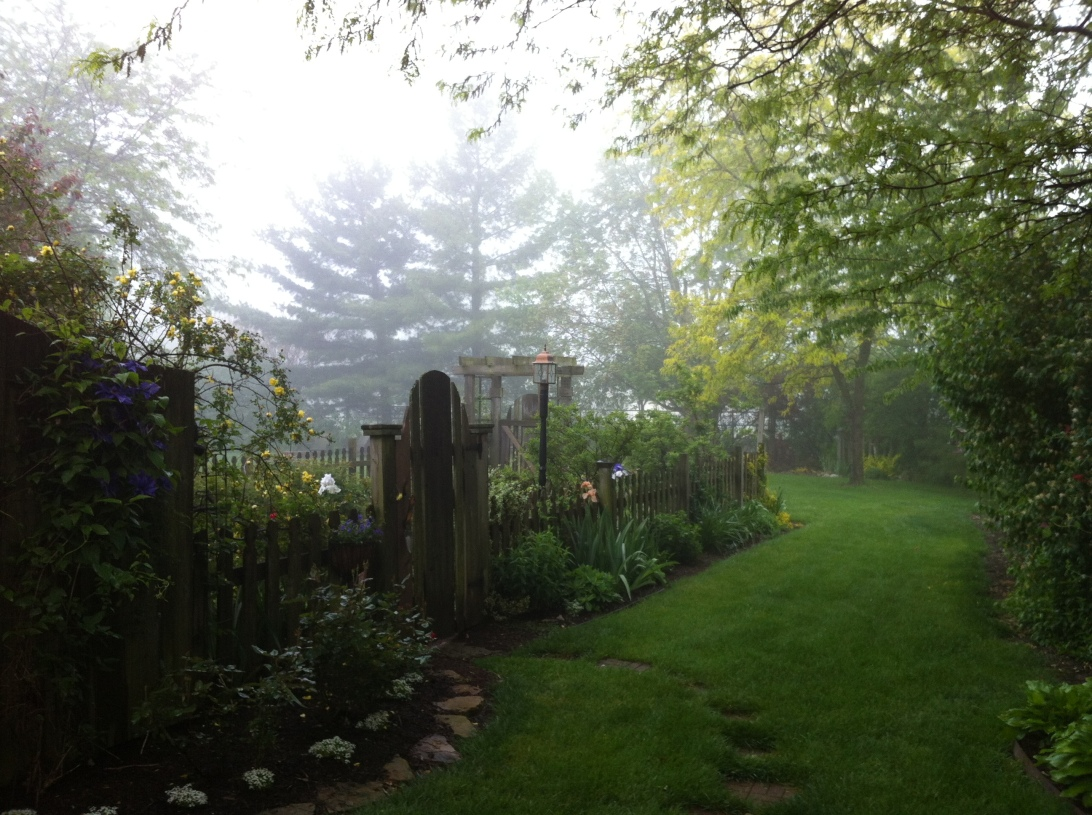 A foggy entrance to my garden...