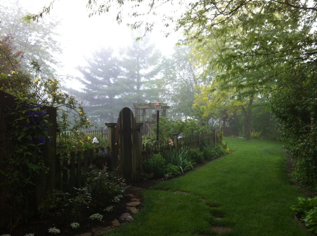 A foggy entrance to my garden...