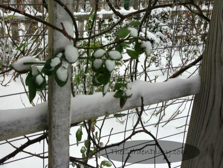 SNOWDAY_004