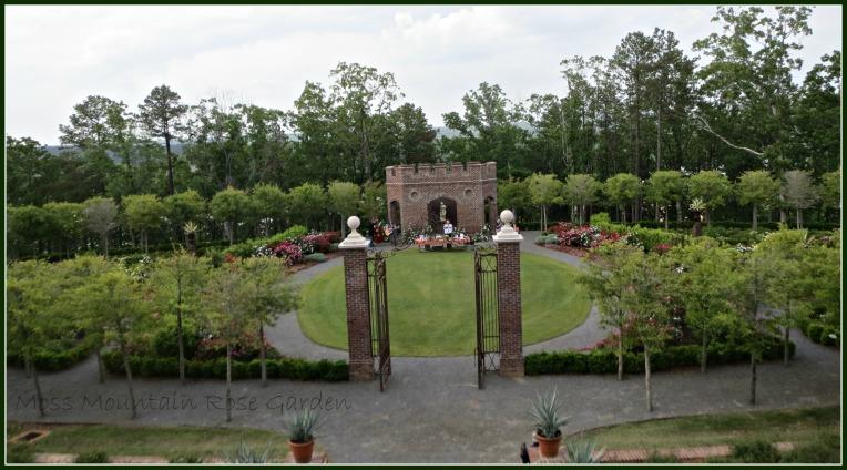 Moss Mountain Rose Garden
