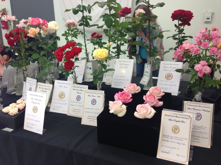 Our society has some wonderfully talented rose growers, arrangers and exhibitionist!