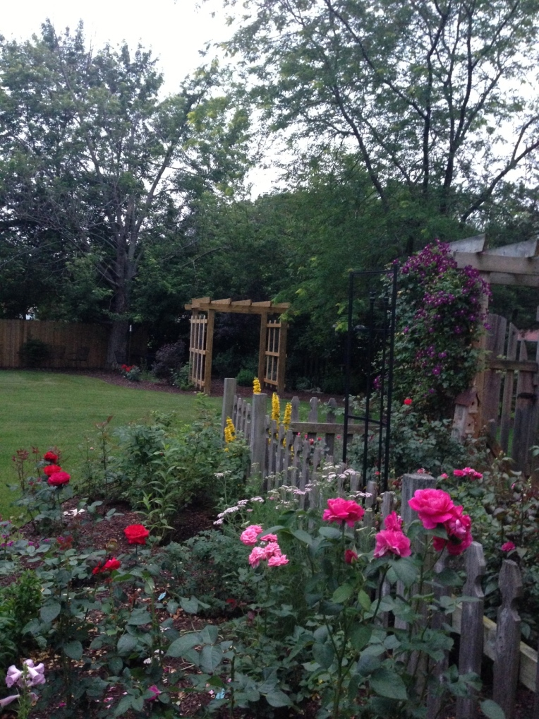 New arbor is across from another rose arbor with New Dawns. They'll be good neighbors I think!