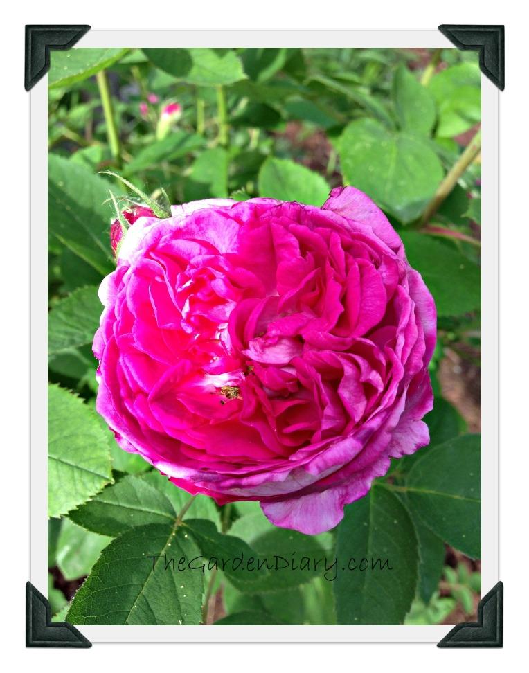 Violettes_13_004