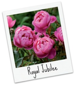 royal_jubilee_pol