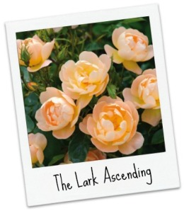 The Lark Ascending_Pol