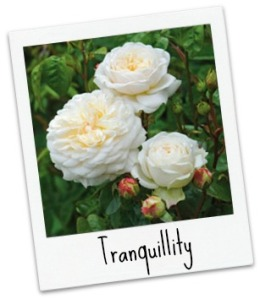 tranquility_pol