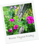 Bloom Thyme Friday