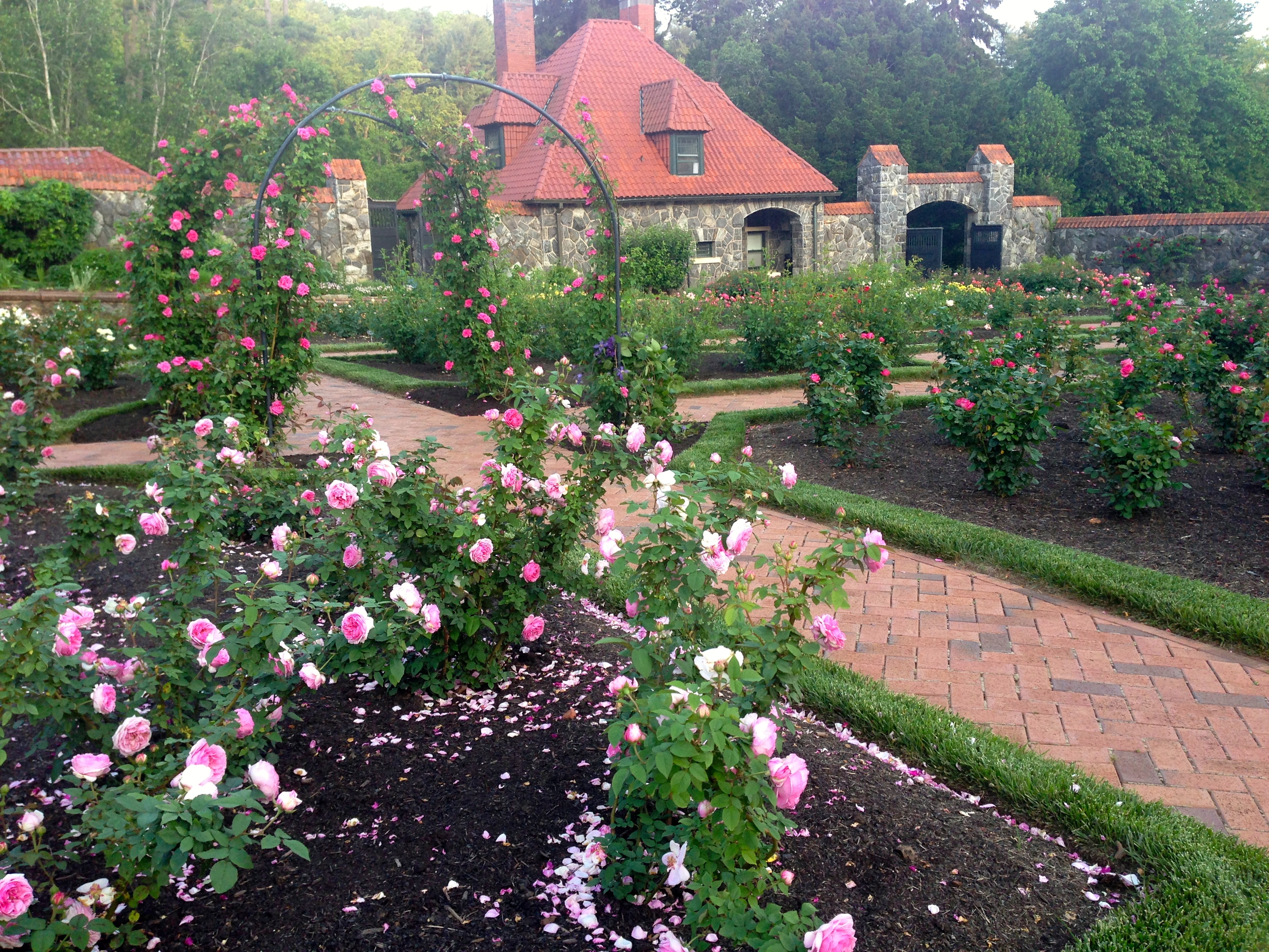 biltmore rose trials 2014 u2013 the garden diary