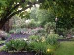 Garden after a quick rain