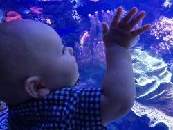 H @ Aquarium 3