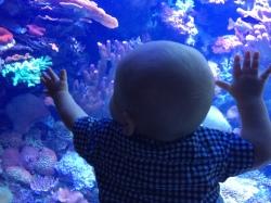 H at Aquarium 2
