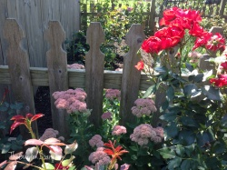 Pollinator's delight