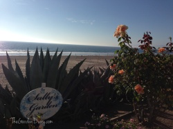 """""""Sally"""" is a very lucky girl, her beautiful rose garden is also her entrance to the ocean."""
