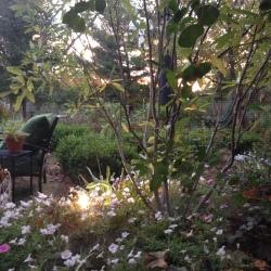 Evening shot from my swing --- hru my screen porch window
