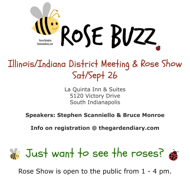 Rose Buzz Rose Show