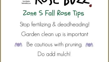 Fall Rose Care The Garden Diary