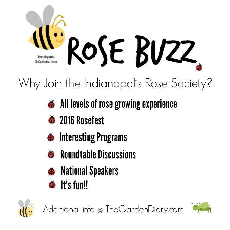 _Rose Buzz_IndyRoseSoc
