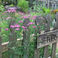 "Love the ""yarrow"" welcome to the Herb Garden..."